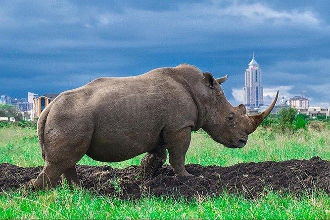 Half Day Nairobi National Park Tour from Nairobi