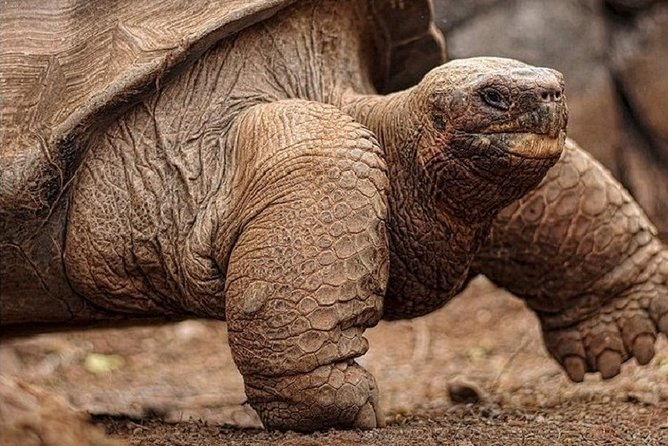Land Tortoises in the wild + Magnificent Lava tunnel and sinkholes