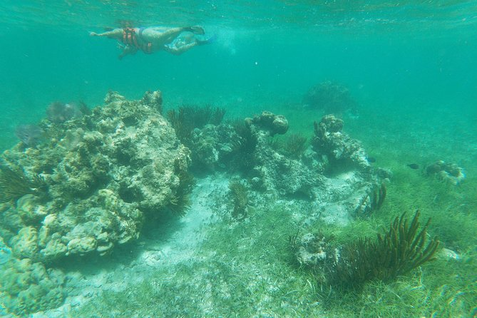 Reef Snorkelingwith ATV, Zipline, Cenote that includes lunch and transportation