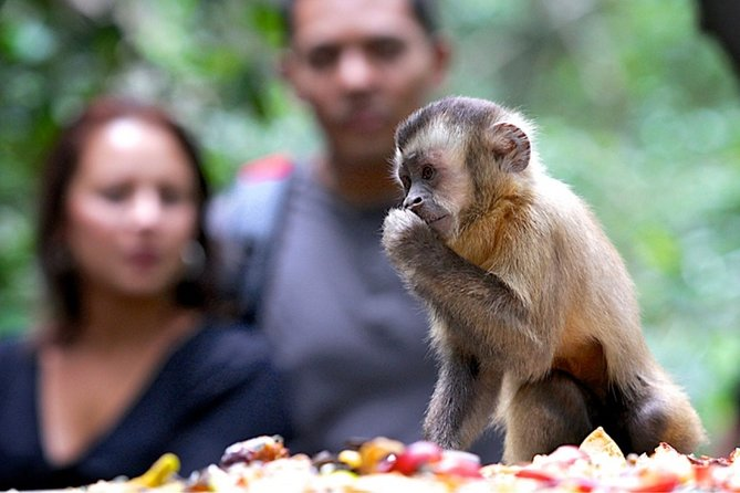 Durban: Visit a Museum of living Plants and a Sanctuary for Primates