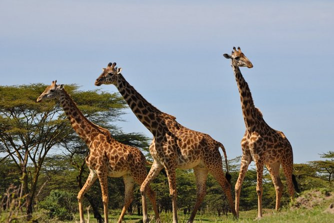 Mikumi Wild Safari