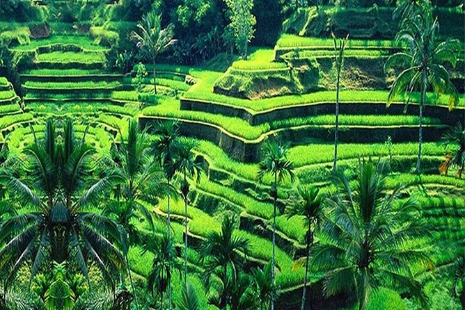 Bali 4 Days Scenic Must-visit Tour Package