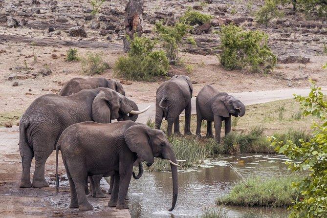 Durban: Big 5 Luxury Safari at an Award Winning Game Reserve — Zeiss Binoculars