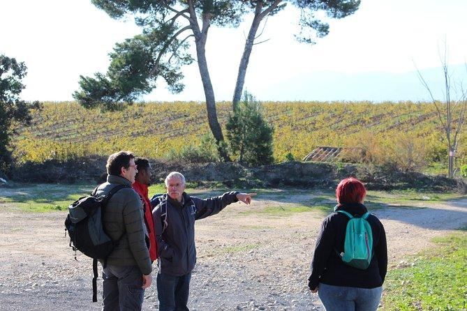 Walks in the heart of the secret vineyards around Collioure, tastings