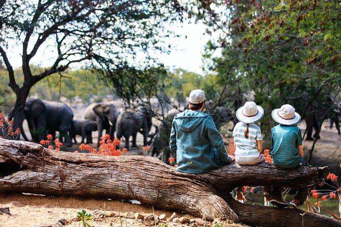Durban: Adrenaline Junkies Safari Game Drive + Walking Safari + Zeiss Binoculars