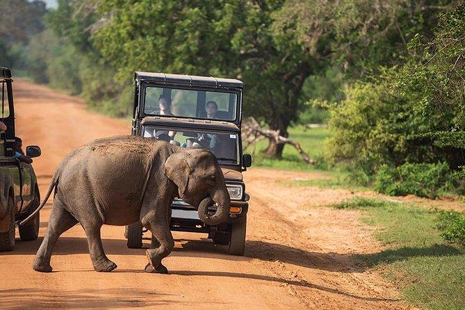 Kumana National Park Safari From Arugam Bay ( jeep+ tickets )