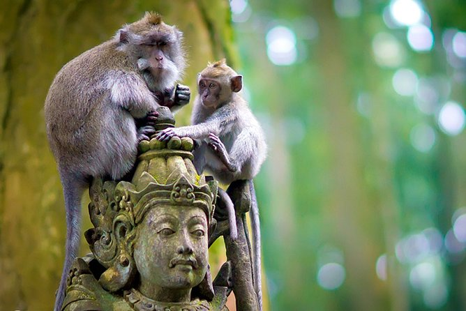 One Day Tour Bali - angeSangeh (Monkey Forest) edBedugul √Sunset at Tanah Lot