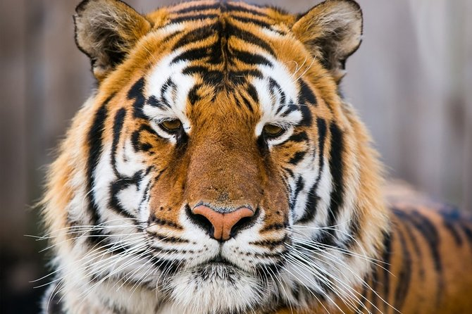 Day Trip to Ranthambore Tiger Safari from Jaipur