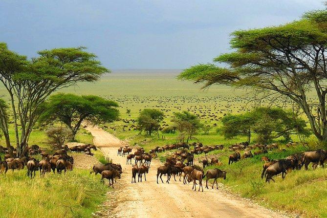 3-Day Kruger National Park Big 5 Tented Safari