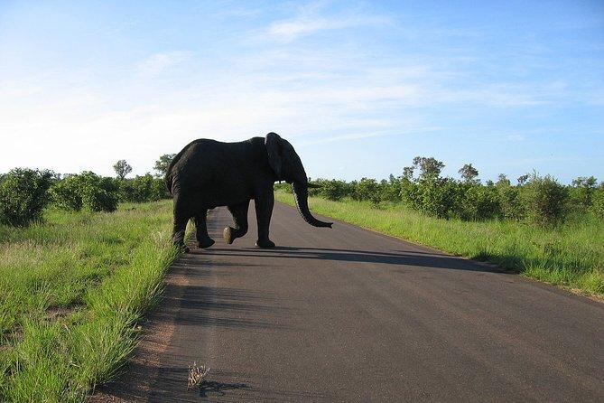 3-Day Kruger National Park Big 5 Budget Safari