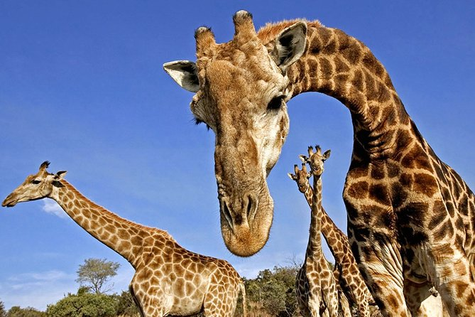 5-Day Kruger National Park & Panorama Route Backpacker Safari
