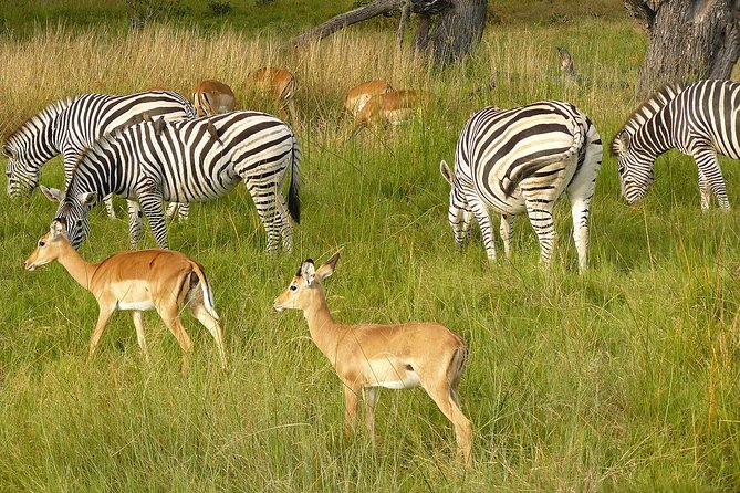 4-Day Kruger National Park & Panorama Route Camping Safari