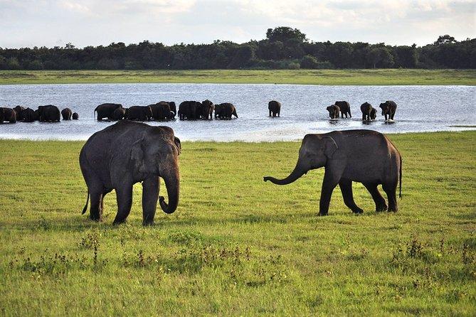 Day-trip from Sigiriya or Habarana - Village Life & Elephant Safari Experience
