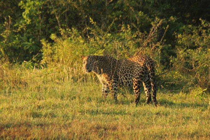 Weheragala National Park 5 hours Afternoon Safari