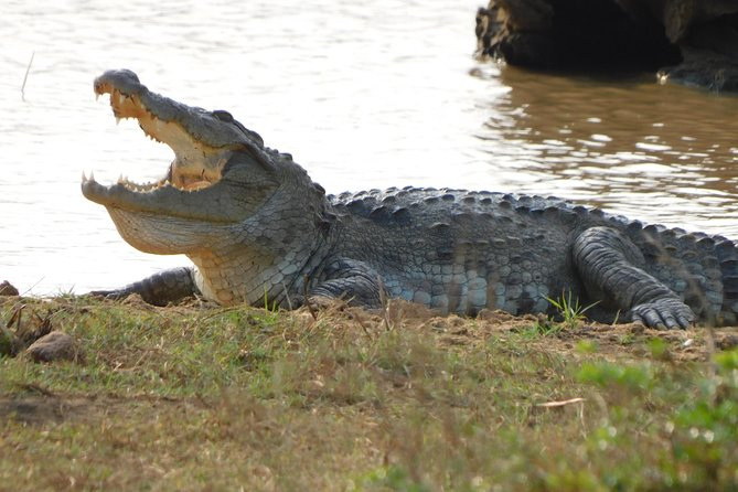 Weheragala National Park 7 hours Morning Safari
