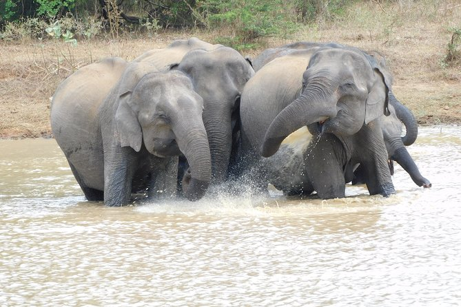 Udawalawe National Park Full Day Safari