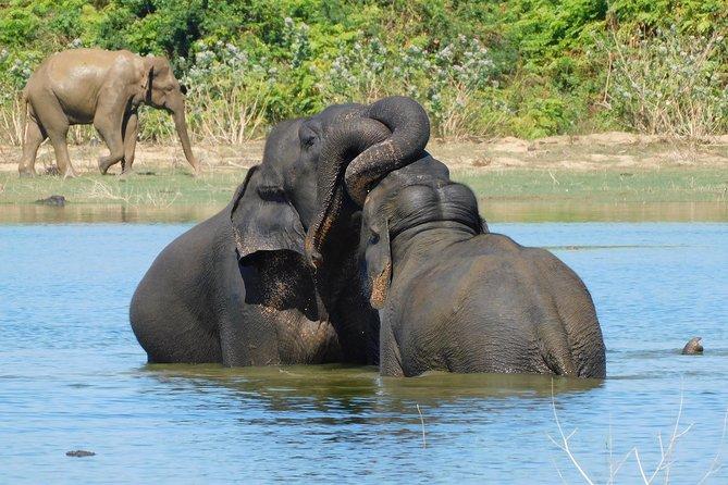 Udawalawe National Park 7 Hours Morning Safari