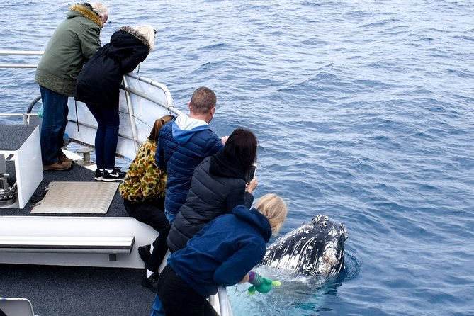 Phillip Island Whale Watching Tour