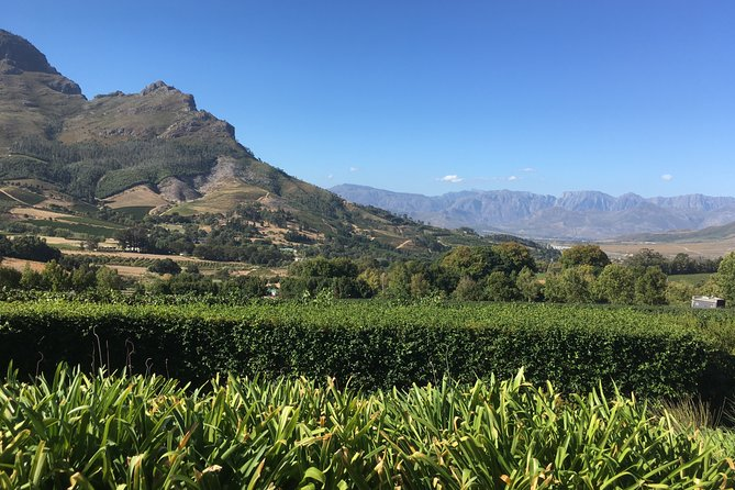 Full day South African Wine Tour (Stellenbosh, Franschhoek and Paarl)