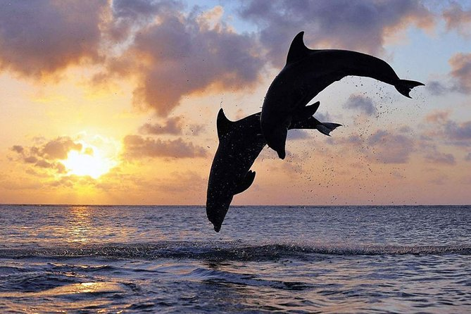 Full-Day Bali Car Charter to See Dolphin in Lovina and North Bali Tour