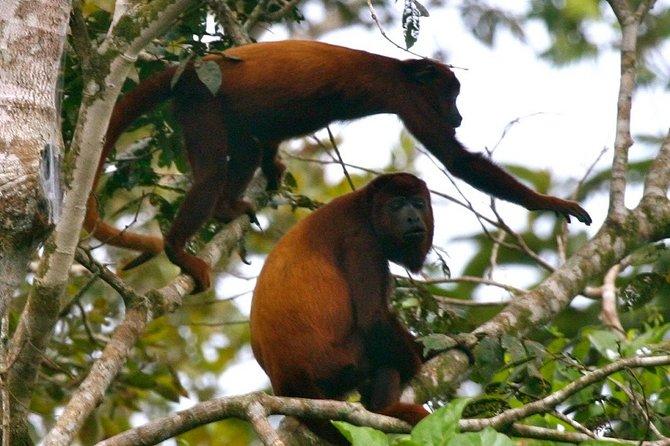 4 Days, Experience in Reserva Amazónica