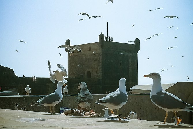 Essaouira - Day Trip from Marrakech - shared/small group (8 pers)