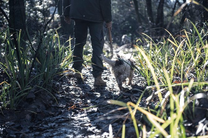 Truffle hunting experience with lunch near Florence