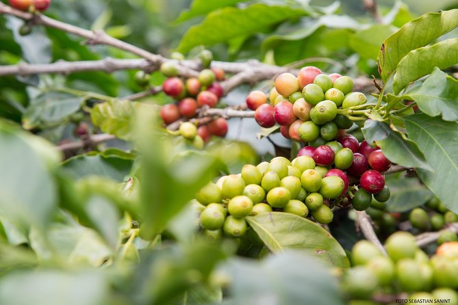 Coffee Farm - Daily and group tour