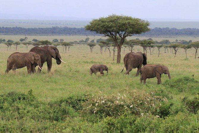 7 Day Uganda Safaris