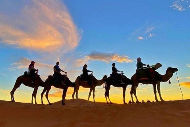 Desert Experience Tour