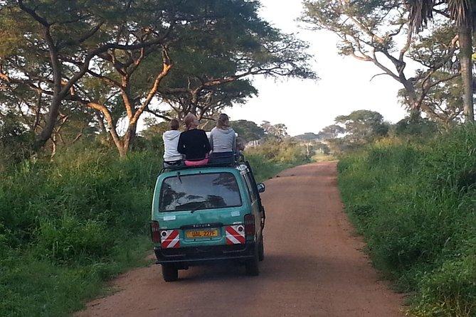 Murchison Falls Day-Trip from Masindi