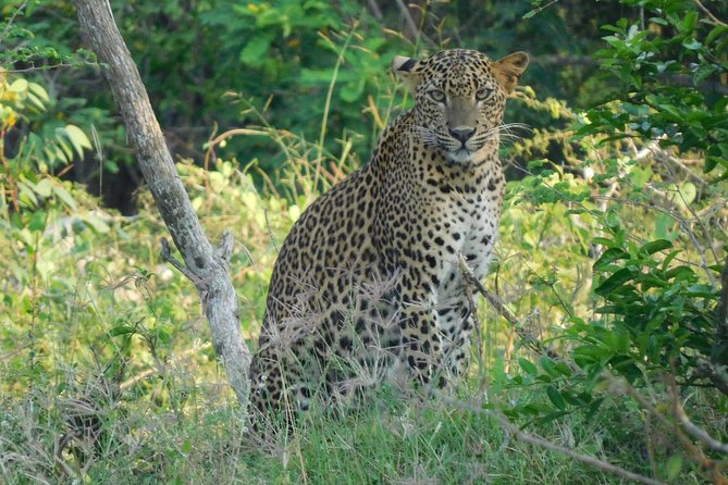 Weheragala (Yala block 5) Full day safari
