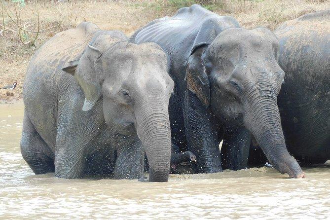 Udawalawe National Park 7 hour Safari Tour