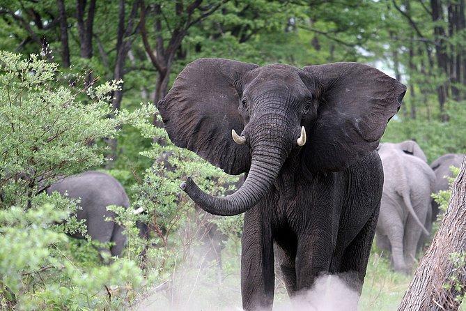 Elephant Herd Chobe National Park