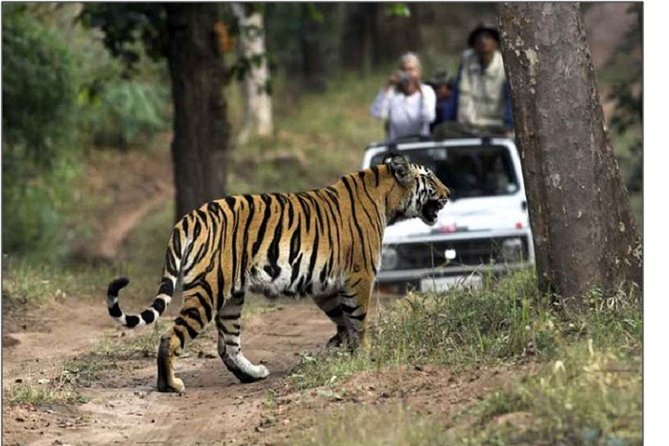 Golden Triangle With Ranthambore Tour
