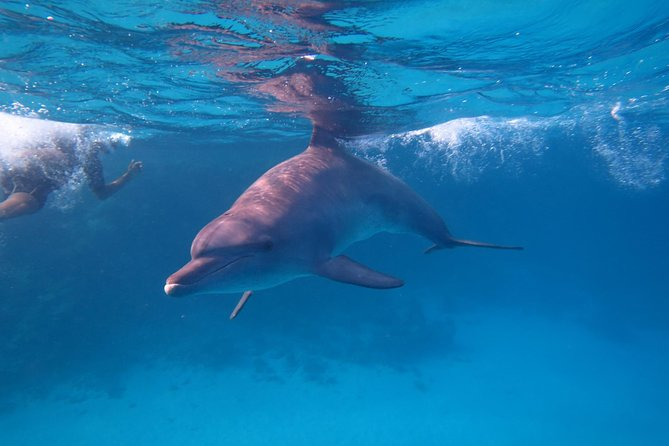 Swimming with Dolphins Tour & Lunch & Water Sport : Hurghada