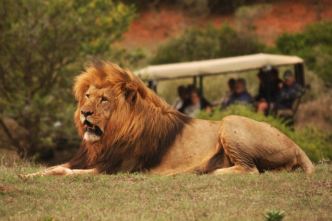 Full-Day Addo Elephant Park Tour and Night Safari with Meals