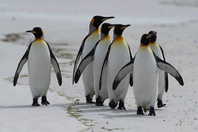 Private Guided Sightseeing Day Tour of Cape Peninsula Penguins