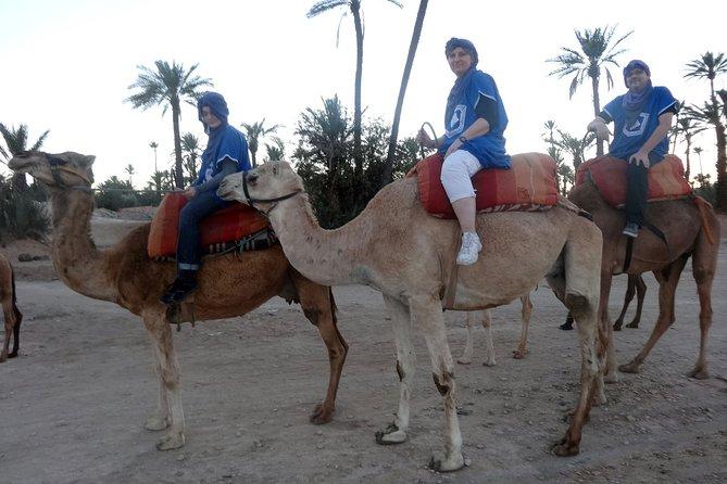 Camel ride in Marrakech 2 hours