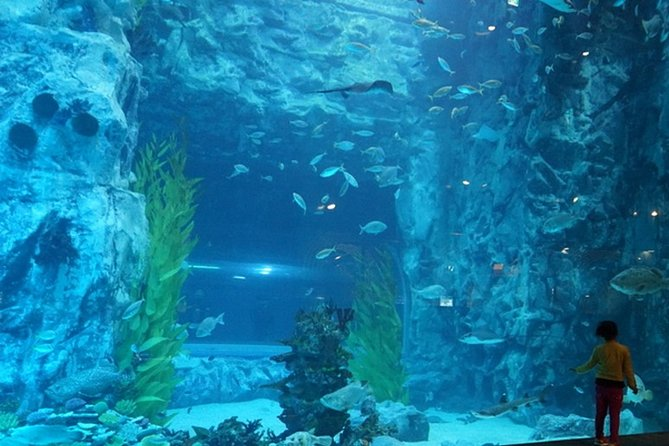 Full-day Private Lotte Tower, Aquarium and Lotte world Theme park Tour