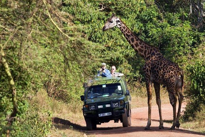 2-Day Tanzania Small-Group Safari from Arusha