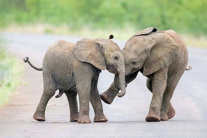 Private 2 Day Wildlife Safari Tour of Ngorongoro Crater & Tarangire