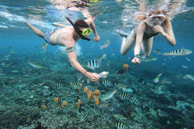 Private Guided Snorkeling Experience at Blue Lagoon Beach