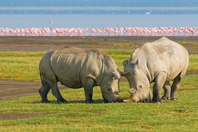 3 Days Luxury Lodge Safari To Tarangire, Lake Manyara & Ngorongoro Crater