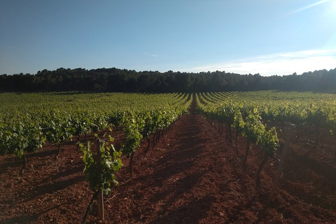 Private Morning Wine and Winery Tour and Tasting from Valencia