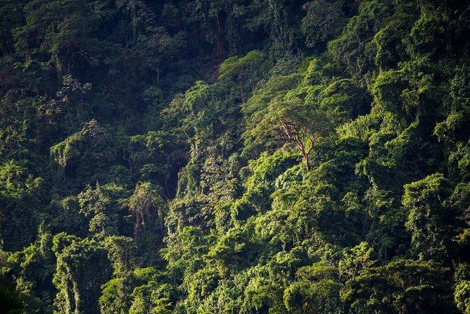 Visite en petit groupe de la réserve naturelle de Chocoyero El Brujo au départ de Managua