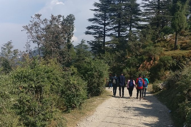 Nature Walk of Mussoorie (2 Hours Guided Walking Tour)