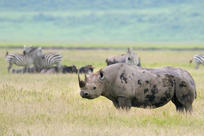 5 Day Tour of Ngorongoro Crater & Serengeti National Park