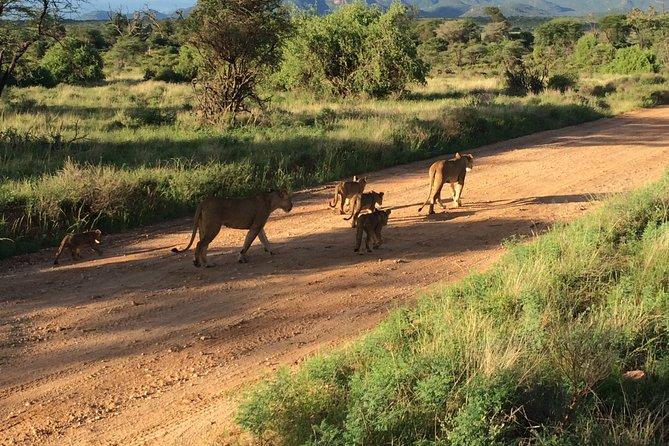 3 Days Air Safari To Maasai Mara From Diani