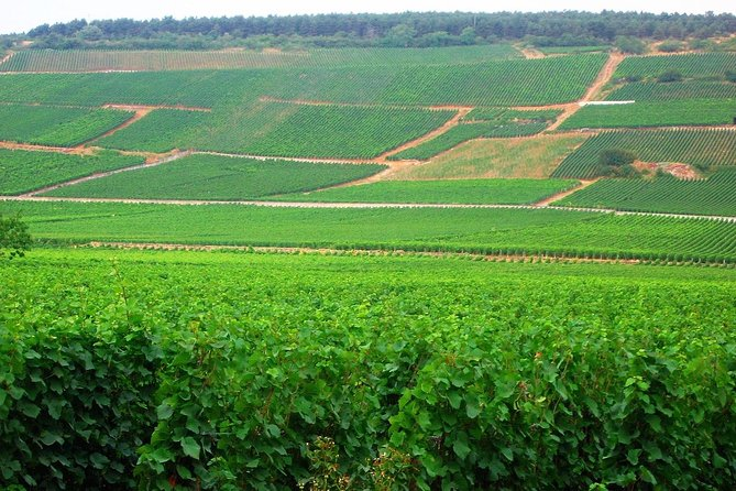 SIGHTJOGGING between Vosne-Romanée and Vougeot with tasting on arrival